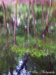 Trees reflected in the lake at Puttenham Common. High quality prints available in a variety of sizes. Makes lovely wall art for your home or office. Tree Lighting, Abstract Photography, Pond, Reflection, Trees, Wall Art, Crystals, Natural, Plants