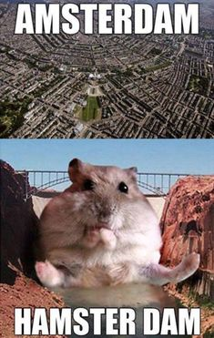 Funny pictures about Hamster dam. Oh, and cool pics about Hamster dam. Also, Hamster dam. Funny Captions, Funny Jokes, Hilarious, Funniest Jokes, Animal Memes, Funny Animals, Cute Animals, Best Funny Pictures, Funny Photos