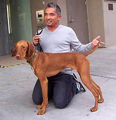 Cesar Millan teaches how to achieve balance with your dog. Most Beautiful Dog Breeds, Beautiful Dogs, Pet Dogs, Dog Cat, Doggies, Dog Psychology, Vizsla Puppies, Weimaraner, Cheap Pets