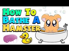 Sand baths for hamsters https://www.youtube.com/watch?v=uDw3DmTvHNM