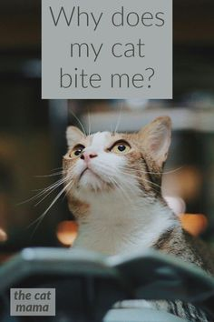 Cat Care Kittens Is it love? Or aggression?How do I make my cat stop? - Why do cats give love bites? Is it love or is your cat trying to tell you something. Learn why your cat bites you and how to get him to stop. Cat Lover Gifts, Cat Lovers, First Time Cat Owner, Cat Biting, F2 Savannah Cat, Mama Cat, Cat Behavior, All About Cats, Cat Facts