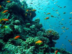 Under Water life Red sea,Egypt by Memphis Tours Egypt, via Flickr