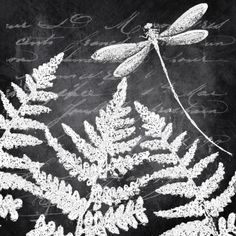 Claire Pryce - Chalkboard Ferns and dragonfly copy.jpg