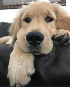 Is there a sweeter face??