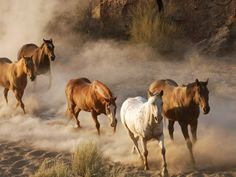 Image detail for -wild-horses.jpg picture by Christianeh22 - Photobucket