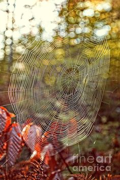 Spider Web by Photographer Edward M. Fielding