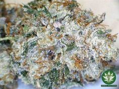 Death Star - HYBRID - Death Star is a cross between Sensi Star and Sour Diesel which is most commonly known as an indica dominant. Death Star possesses the best attributes of both its parents. Its name is assumed to be linked with Star Wars movies. It has the indica/sativa ratio of 75% to 25%. Learn more: https://www.allbud.com/marijuana-strains/hybrid/death-star