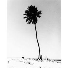 Print of Single Palm Tree  – summer & beach    photography black & white . Schwarz-Weiß-Fotografie . photographie noir et blanc   @ St. Barts  