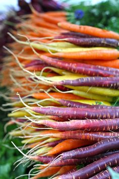 Colorful Carrots from Farmers Market of New England Fruit And Veg, Fruits And Veggies, Root Veggies, Growing Vegetables, Cuisine Diverse, Permaculture, Farmers Market, Vegetable Garden, Vegetables Garden