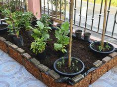 7 Tips for Urban Farming
