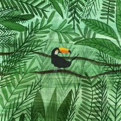 #toucan #jungle #illustrationartists  Elif Demir