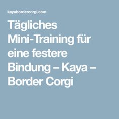 Tägliches Mini-Training für eine festere Bindung – Kaya – Border Corgi