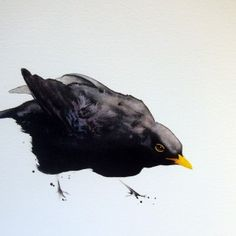 Blackbird-2 - Karl Martens - watercolor