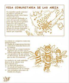 La Familia de la Apicultura - The Beekeeping of Family: Manual Apícola Ilustrado - Beekeeping Illustrated Manual. Drone Bee, Beekeeping For Beginners, Raising Bees, Bee Boxes, Bee Farm, Golden Honey, Chamomile Tea, Queen Bees, Bee Keeping