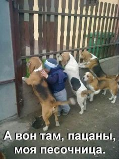 <h4>Смешное фото</h4>