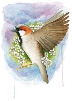 House sparrow - Watercolor painting created by the Swedish artist Emma Andersson. Shop: https://www.etsy.com/ca/shop/greenfoxart/items