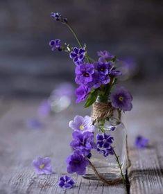 Dark Flowers, Pastel Flowers, Simple Flowers, Amazing Flowers, Beautiful Roses, Vintage Flowers, Pretty Flowers, Purple Flowers Wallpaper, Flower Phone Wallpaper