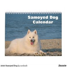 Shop 2020 Samoyed Dog Calendar created by sunbuds. Dog Calendar, Calendar 2020, Samoyed Dogs, Dog Photography, White Elephant Gifts, Gifts For Family, Pets, Animals, Animales