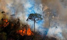 Amazon near tipping point of switching from rainforest to savannah – study | Climate change | The Guardian International Criminal Law, Corporate Crime, Single Tree, Western World, Island Nations, Amazon Rainforest, Natural Resources, Fauna, Pantanal