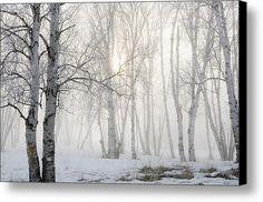 Ontario, Canada Birch Trees In The Fog Canvas Print / Canvas Art By Susan Dykstra