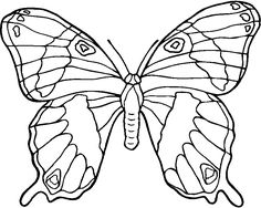 Coloriage papillon : Des photos du papillon à imprimer et colorier