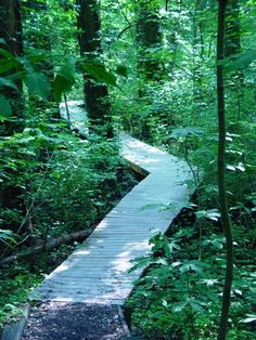 Battle Creek Cypress Swamp Sanctuary. Boardwalk trail through the Cypress Swamp Calvert County.  Visited 2010