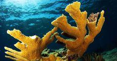 Day 8: Journey to Cuba's underwater Eden   Environmental Defense Fund