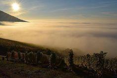 #Heaven on #Earth Photo by Béres Szőlőbirtok  #tokaj #tokajwineregion #tokaji #visittokaj #tokajhegyalja #tokajiaszú #tokajwine #vineyard #tokajiborok #aszú #ig_magyarorszag #ig_magyarország #hungary_gram #loves_hungary #visithungary #naturelovers #nature @eurotravellers #UNESCO #worldheritage #unescoworldheritage