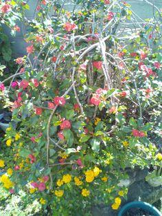 A mixture of beautiful flowering plants - Florence garden