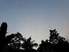 sky x trees