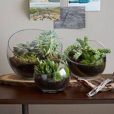 Semi-Circle Terrarium, Large - Natural, West Elm - Terrarium Planters - Succulent & Cactus Pots