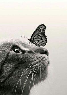 Un chapillon