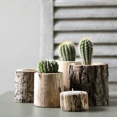 tree trunk planters and candle holder