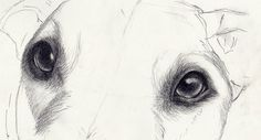 Drawing a realistic dogs starts with lifelike eyes eyes. Get a step-by-step tutorial by artist Veronica Winters for drawing eyes that jump off the page.