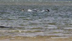 Al final parece ser que se ha capturado una foto real del monstruo del Lago Ness  Y da miedo #viral