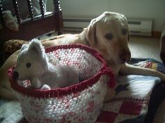 Plarn Tote for pet toys