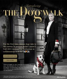The Dog Walk: A Short Film Starring Some Very Discerning Pups