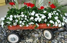gardening ideas planter vintage wagon fall ideas rustic, container gardening, repurposing upcycling, Fully grown in my little red wagon