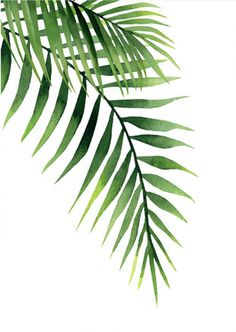 Stencil Painting On Walls, Plant Painting, Plant Art, Painting Frames, Tropical Art, Tropical Leaves, Palm Frond Art, Drawing Activities, Leaf Template
