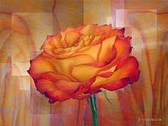 Tapestries Series - February Rose Photo Art, February, Tapestry, Gallery, Rose, Paper, Flowers, Plants, Painting