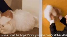 http://www.change.org/p/consiliul-na%C5%A3ional-al-audiovizualului-cerem-interzicerea-spotului-oskar-lavabil-pentru-instigarea-la-violenta-impotriva-animalelor