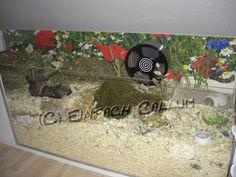 Der 145cm (Länge)x 55cm (Tiefe) x 40cm (Höhe)Eigenbau, in dem seit November 2010 der Dsungare Lars wohnt, wurde bereits im Oktober 2009 ge...