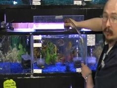 There are many different options for decorating a fish tank. How can you be sure that what you are adding is appropriate for your fish? This article should answer all your questions. 10 Gallon Fish Tank, Fish Tank Cleaning, Tropical Freshwater Fish, Pet Fish, Can You Be, Aquarium Fish, Water Features, Fresh Water, Vacuums