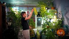Due to the lack of greenery in winter, which lasts nine months in Norilsk, and the absence of parks in the city, many residents build indoor gardens in their homes. (Elena Chernyshova) Stunning Photos of the World's Northernmost City - weather.com