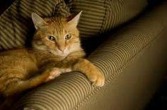 Tecido resistente a unha de gato: Aquablock, Suede e Sarja