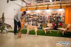 Warning: this article may invoke intense feelings of jealousy. Welcome to Kurgo, a company that has one of the dog-friendliest offices out there! This dog supply manufacturer, owned by brothers Kitter and Gordie Spater, is based in Salisbury, Massachusetts. The company designs …