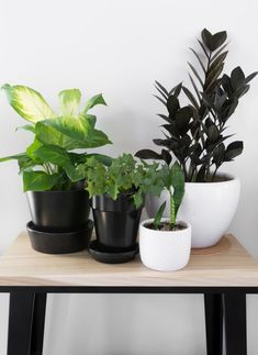 Learn how to propagate snake plants, including how to propagate snake plant cuttings in water and how to propagate snake plants in soil. Peperomia Plant, Pothos Plant, Plant Cuttings, Propagation, Zz Plant Care, Snake Plant Care, Ivy Plants, Large Plants, Dumb Cane Plant
