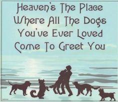 """""""El cielo es el lugar donde todos los perros que has amado vienen a darte la bienvenida"""" ♥ #perros #animales #amigales"""