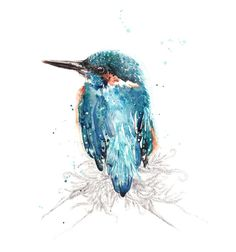 I'm staying on my parents farm in NZ and they have a kingfisher that spends the early evenings collecting worms from the lawn such a joy to watch Kingfisher Tattoo, Kingfisher Bird, Bird Wall Art, Australian Birds, Watercolor Bird, Bird Design, Beautiful Birds, Asian Art, My Drawings