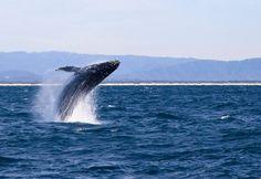Journée internationale de la baleine : le point sur la protection des mammifères marins / iStock.com - Mevans